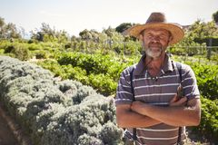 Portrait Of Mature Man Standing In Community Allotment stock photography