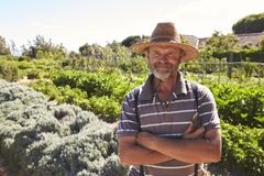 Portrait Of Mature Man Standing In Community Allotment royalty free stock images