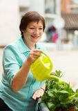 Portrait of mature woman watering domestic plants Royalty Free Stock Image