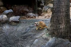Animal in zoo south africa royalty free stock images