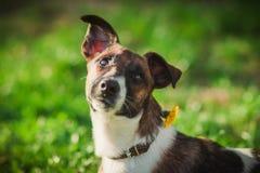 Portrait mignon de chien sur l'herbe Animal familier sur le fond de nature Photos stock