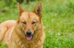 Portrait of mixed breed dog Stock Photos
