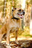 Portrait of a mixed breed dog in Forest Stock Photo
