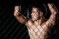Portrait of a MMA fighter in a cage Stock Images