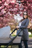 Portrait of mom stand with stroller in the park. Happy young mother walking with baby. Background of pink tree.  royalty free stock image