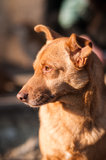 Portrait of a mongrel dog Stock Photos