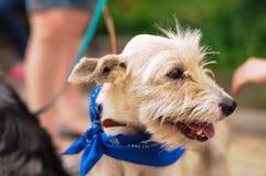 Portrait of a mongrel dog Stock Image