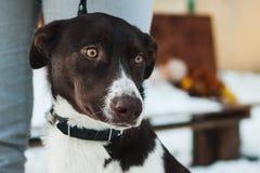 Portrait of a mongrel dog Stock Photo