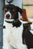 Portrait of a mongrel dog Royalty Free Stock Images