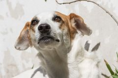 Portrait of mongrel dog sitting in the sun in summer. Happy mongrel dog under the sun Royalty Free Stock Photos