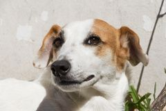 Portrait of mongrel dog sitting in the sun in summer. Happy mongrel dog under the sun Royalty Free Stock Photography