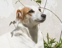 Portrait of mongrel dog sitting in the sun in summer. Happy mongrel dog under the sun Royalty Free Stock Photo