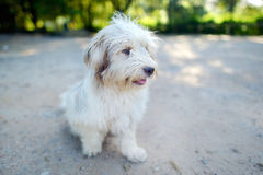 Portrait of a mongrel dog at summer Stock Images
