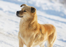 Portrait of a mongrel dog in winter Stock Photos