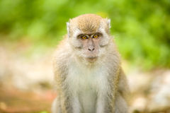 Portrait of a monkey Stock Photo