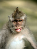 Portrait of the monkey Stock Photos