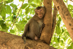 Portrait of the monkey Stock Photo