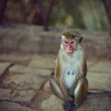 Portrait of monkey female Stock Photos