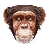 Portrait of Monkey. Hand-drawn illustration, digitally colored Stock Images