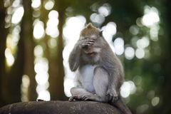 Portrait of a Monkey. stock image