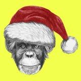 Portrait of Monkey with Santa Hat. Stock Photos