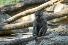 Portrait of monkey sitting alone on the tree stock image