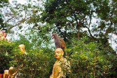 Portrait of monkey sitting on head statue of monk Stock Photos