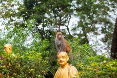 Portrait of monkey sitting on head statue of monk Royalty Free Stock Images