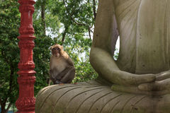Portrait of monkey sitting on statue of Buddha Royalty Free Stock Photography