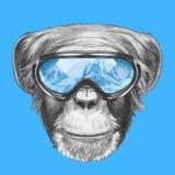 Portrait of Monkey with ski goggles. Royalty Free Stock Photos