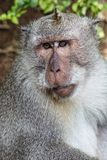Portrait of the monkey. With trees on background royalty free stock image