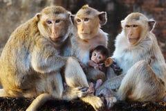 Portrait monkey Stock Photos
