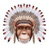 Portrait  of Monkey in war bonnet. Stock Photos