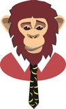 Portrait of a monkey Royalty Free Stock Photos