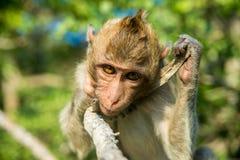 Portrait of monkey Stock Images