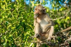Portrait of monkey Stock Photos