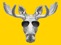 Portrait of Moose with sunglasses. Royalty Free Stock Photography