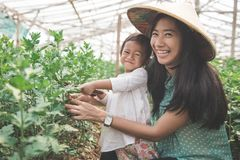Mother and her daughter farming in the farm together. Portrait of mother and her daughter farming in the farm together Stock Photo