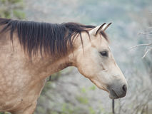 Portrait of moveing half-wild mare. liberty, Israel stock images