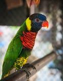 Portrait of a multi-colored parrot, Koh Samui, Thailand Stock Image