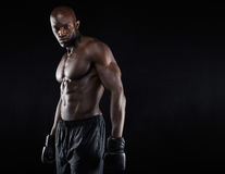 Portrait of muscular male boxer Stock Photography