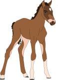 Portrait of a namib desert wild horse kitten royalty free illustration