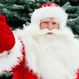 Portrait of natural Santa Claus. Standing at Christmas Tree outdoors in winter and welcoming you with open hands royalty free stock image