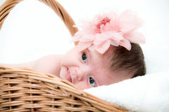 Portrait newborn baby in basket Royalty Free Stock Photography