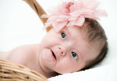Portrait newborn baby in basket Stock Image