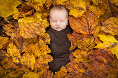 Portrait of newborn baby in fall leaves. A portrait of a newborn baby wrapped in brown swaddling cloth and surrounded by fall leaves Stock Photo