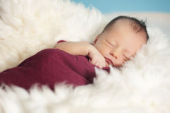 Portrait of newborn baby girl Stock Photos