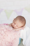 Portrait of a newborn baby Royalty Free Stock Photo