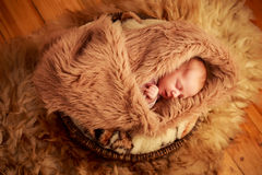 portrait of newborn baby sleeping face with small hands Stock Image