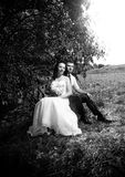 Portrait of newly married couple sitting under tree at park Stock Images